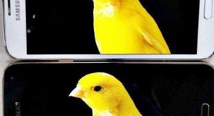 Samsung рассказала о превосходстве смартфонных дисплеев Quad HD перед «обычными экранами»
